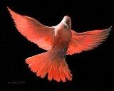 Dove, 7/7/03, 1056,  8C, 5538x6844 (576+1220), 112%, CPC_8bit,  1/30 s, R98.4, G31.5, B40.7